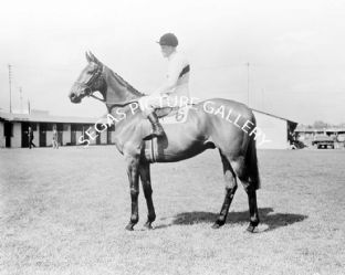 Arkle with Pat Taaffe (b496-03)